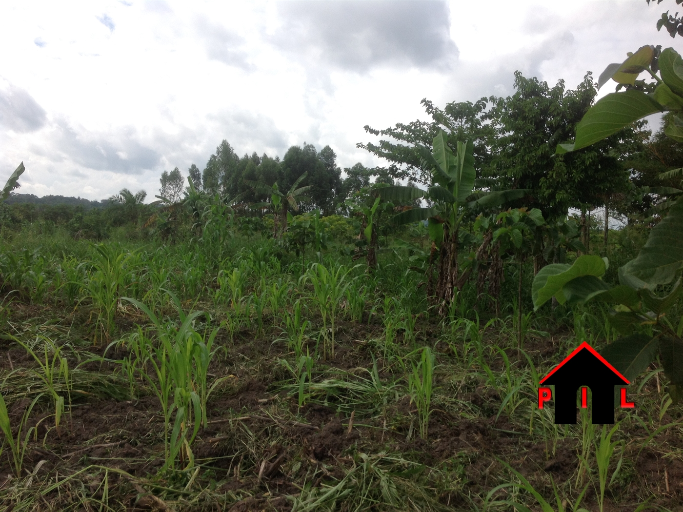 Agricultural Land for sale in Kikyuusa Kayunga