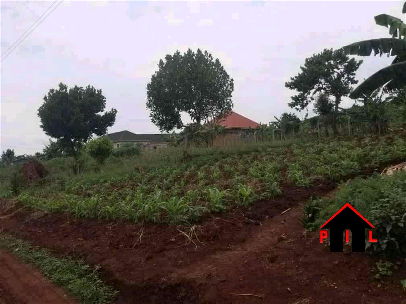 Agricultural Land for sale in Ndibulungi Luwero