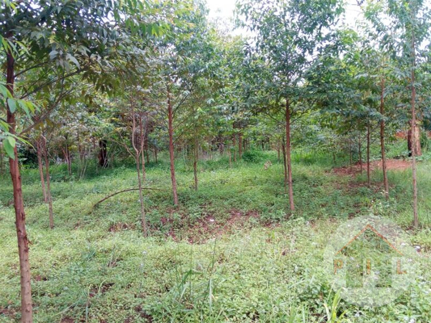 Commercial Land for sale in Kiwanga Mukono