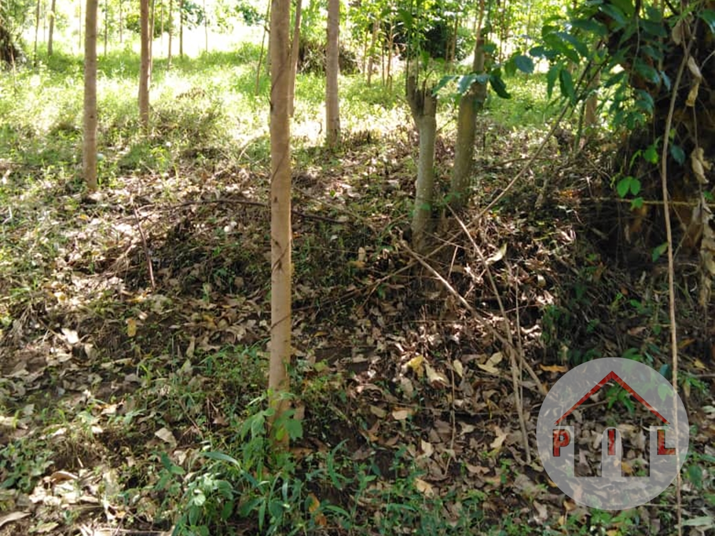 Agricultural Land for sale in Kibuto Mityana