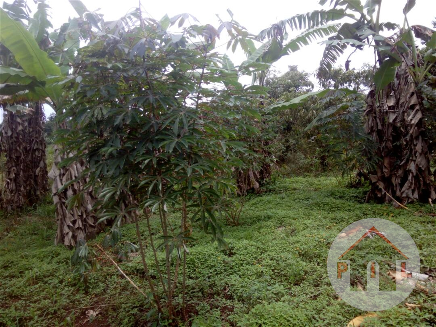 Residential Land for sale in Nkokonjeru Wakiso