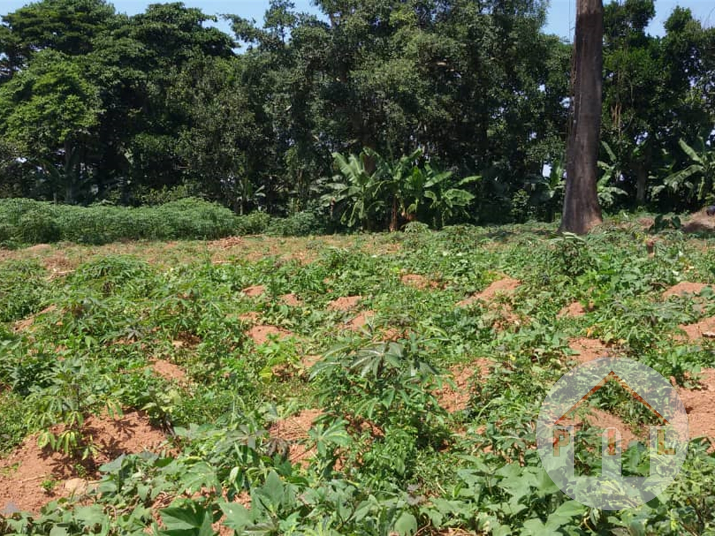Multi Purpose Land for sale in Hima Kasese