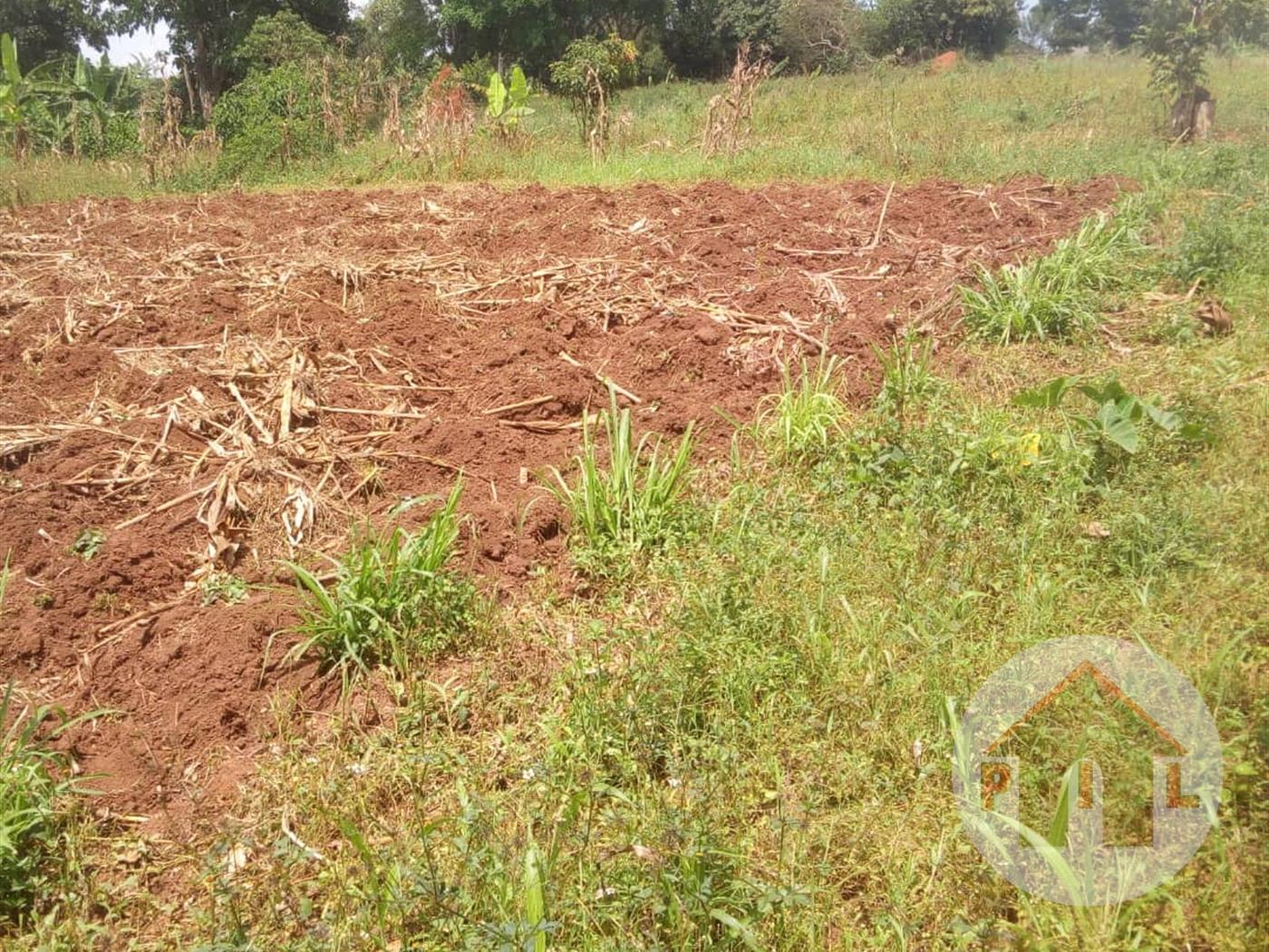 Multi Purpose Land for sale in Byembogo Kiruhura