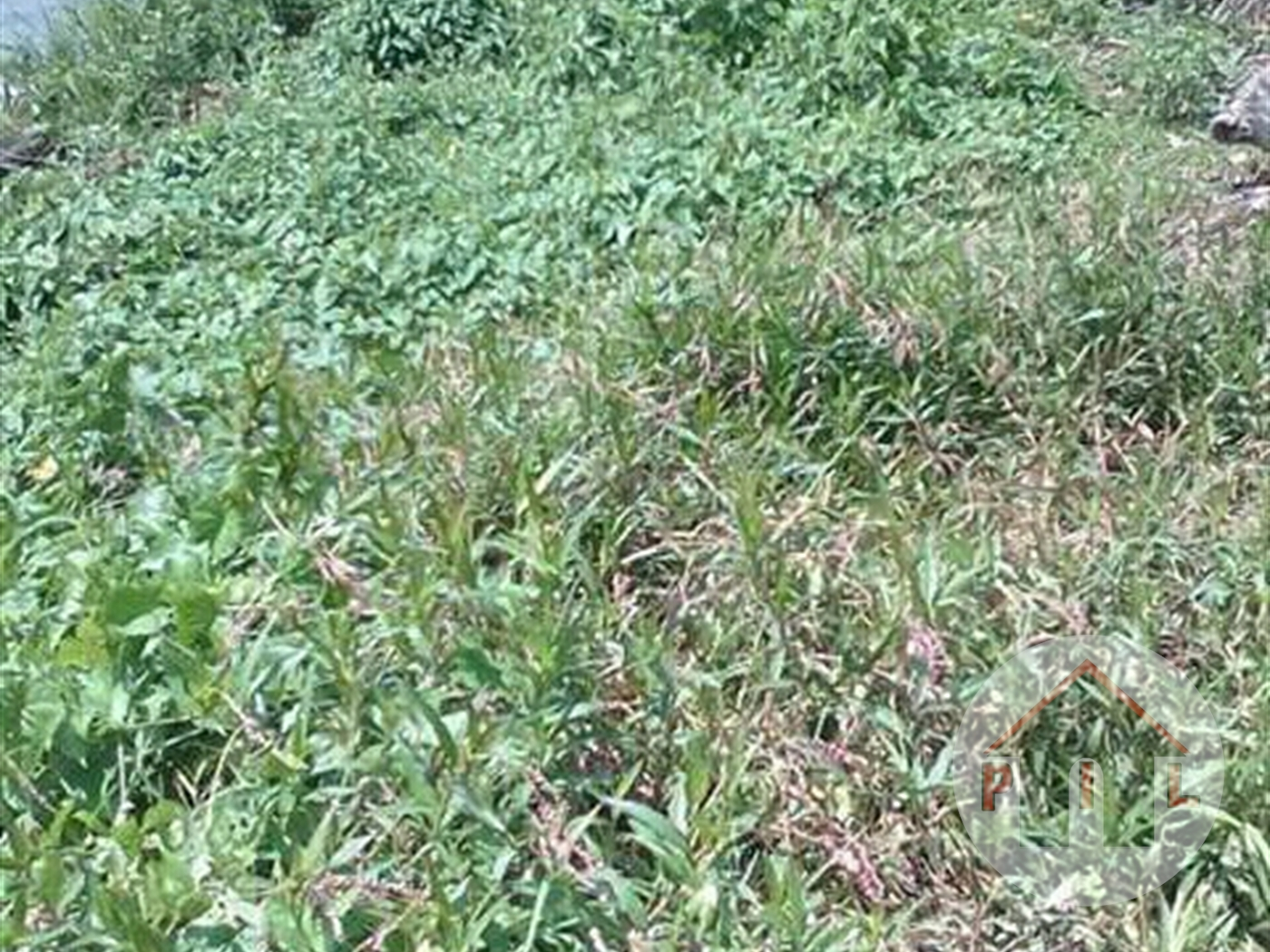 Agricultural Land for sale in Kamwenge Kamwenge