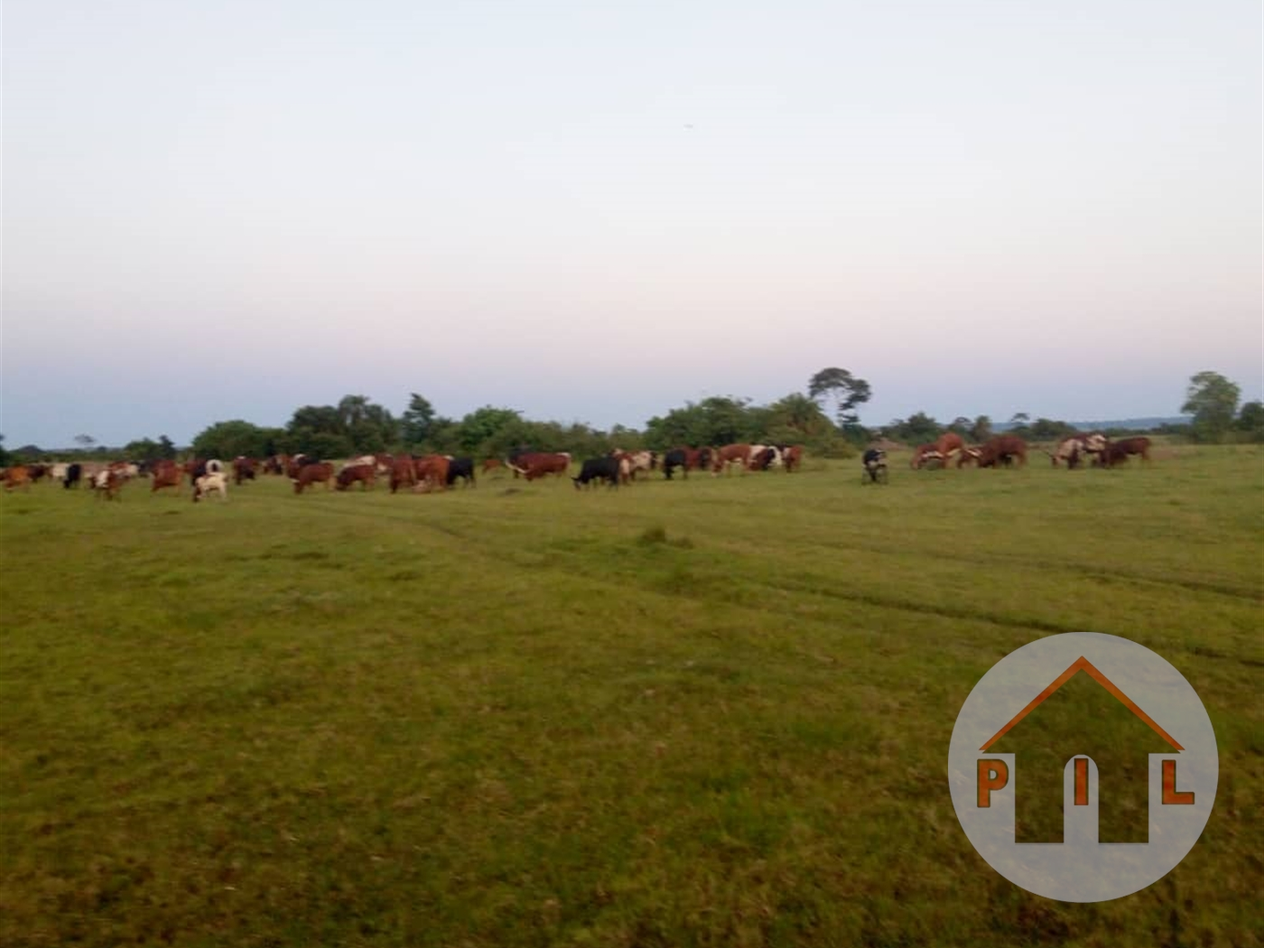 Agricultural Land for sale in Kiganda Mubende