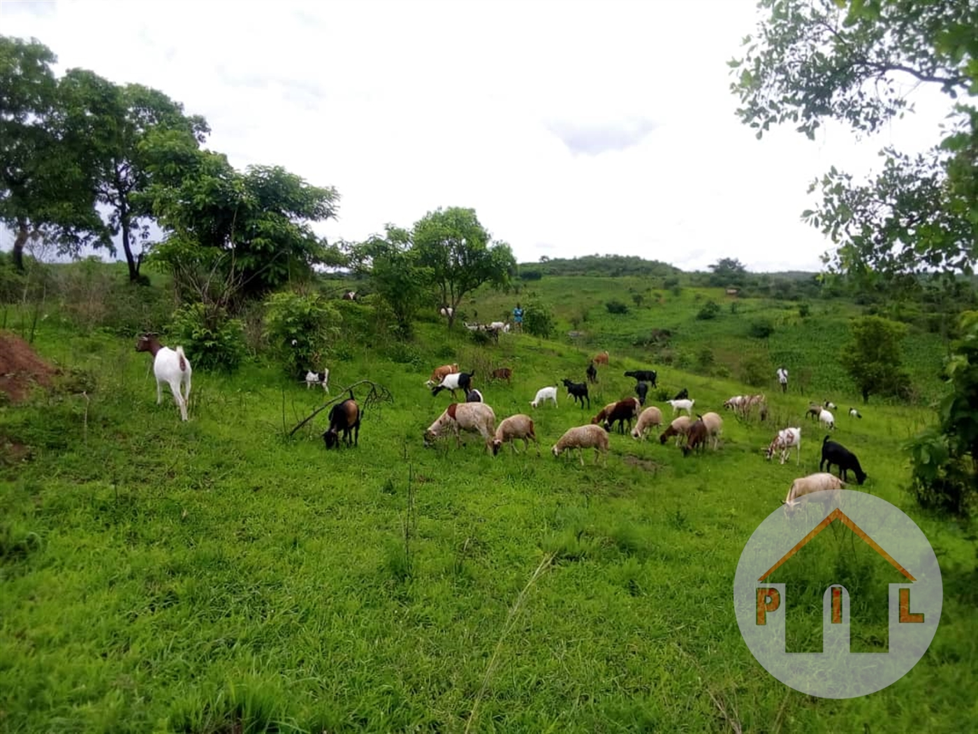 Agricultural Land for sale in Ngoma Kamwenge