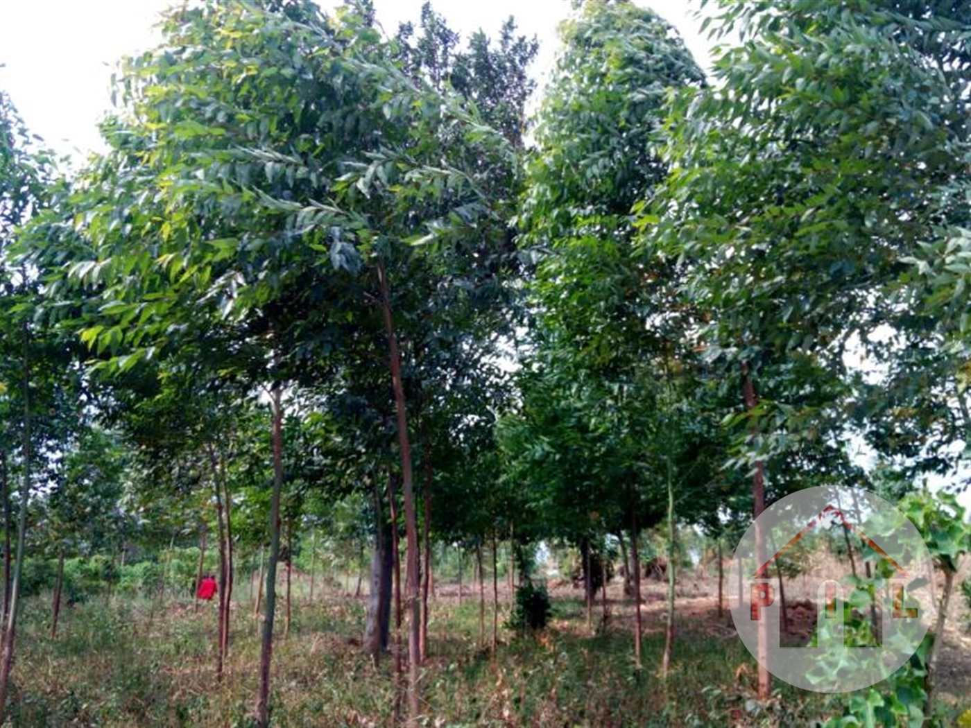Agricultural Land for sale in Myanzi Mityana