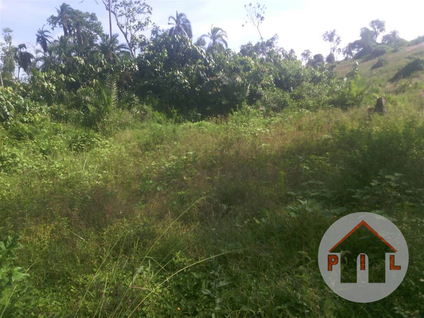 Agricultural Land for sale in Madudu Mubende