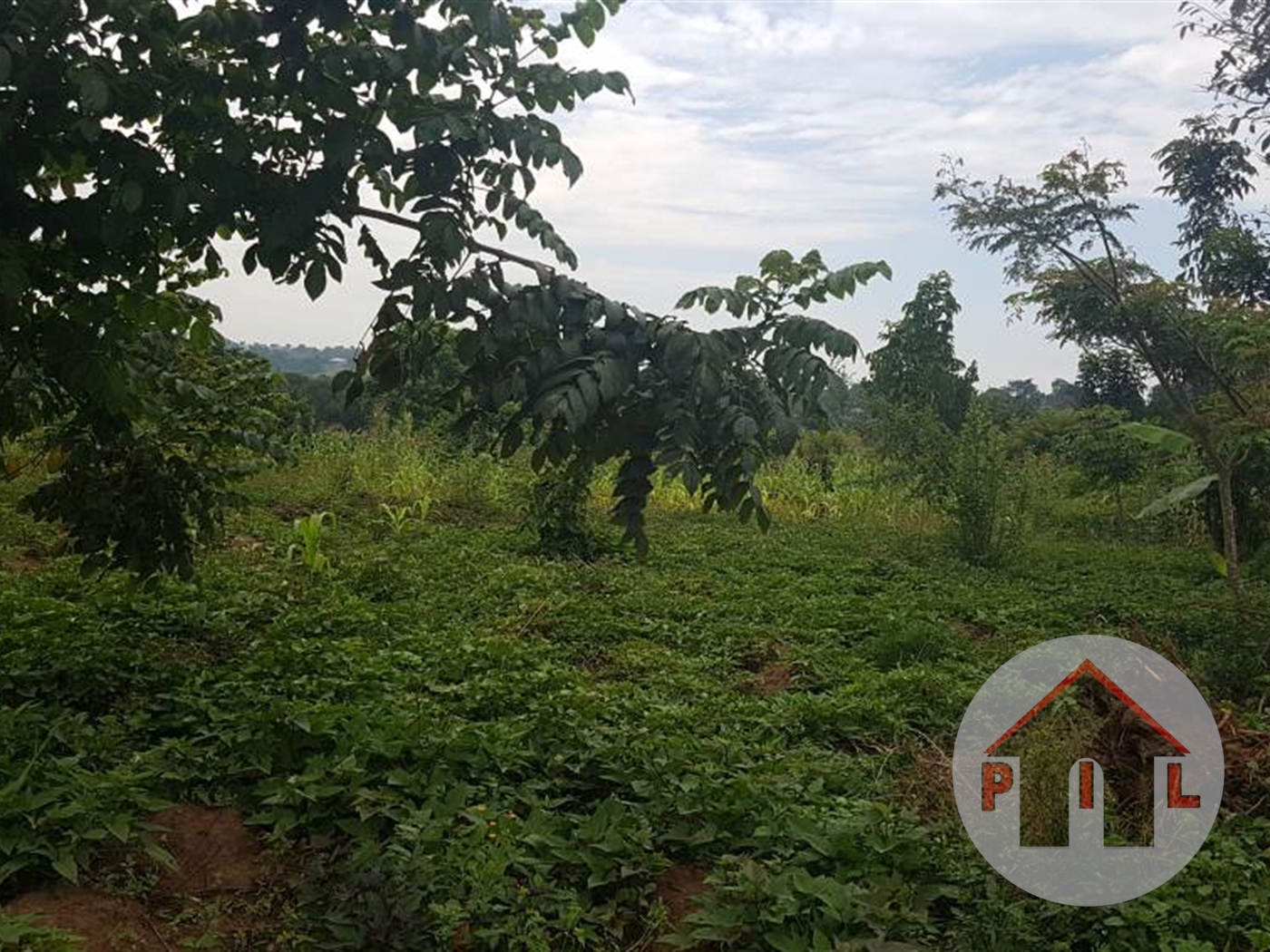 Agricultural Land for sale in Zirobwe Luwero
