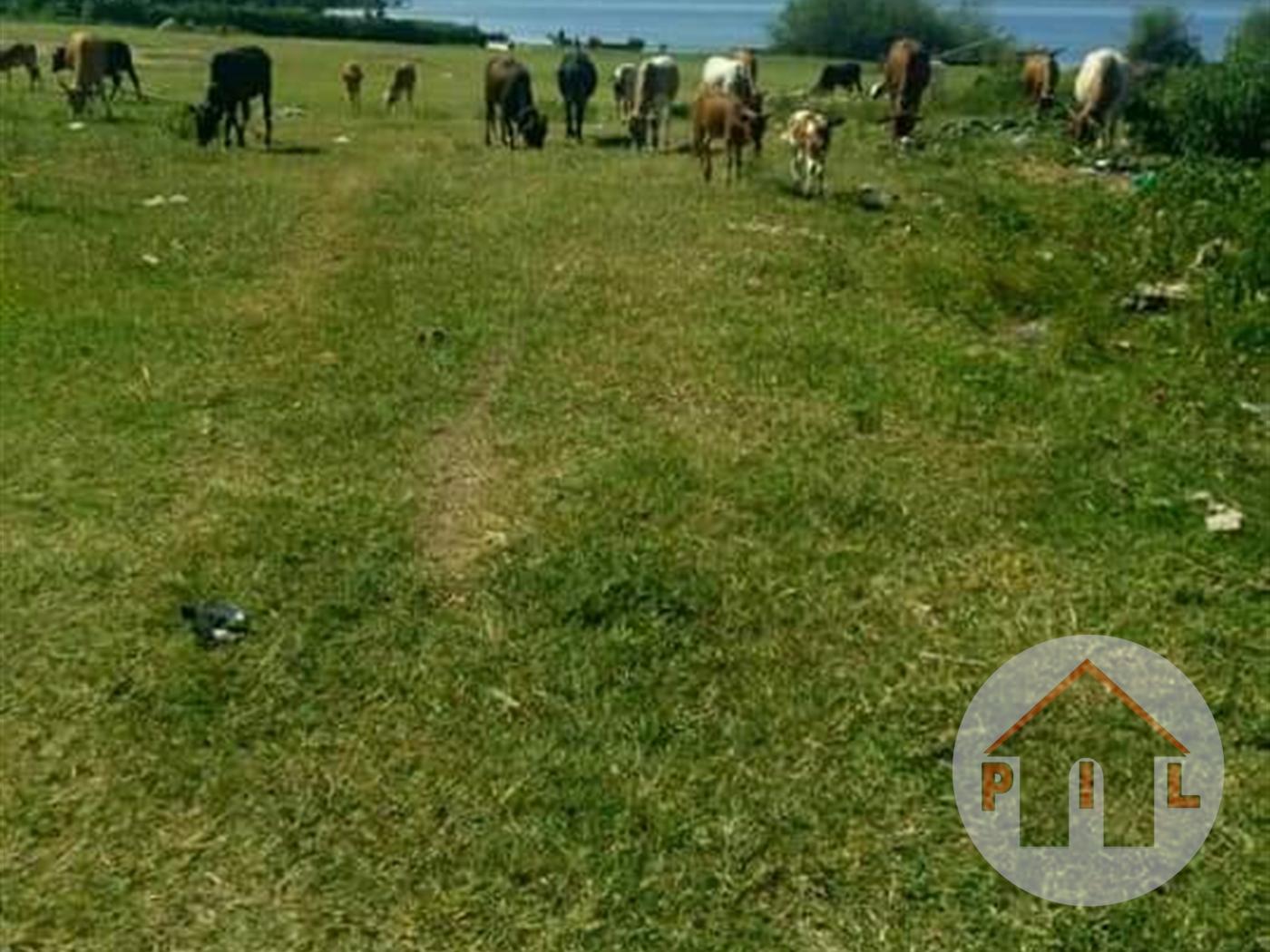 Agricultural Land for sale in Maddu Mpigi