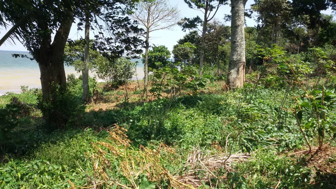 Multi Purpose Land for sale in Entebbe Kampala