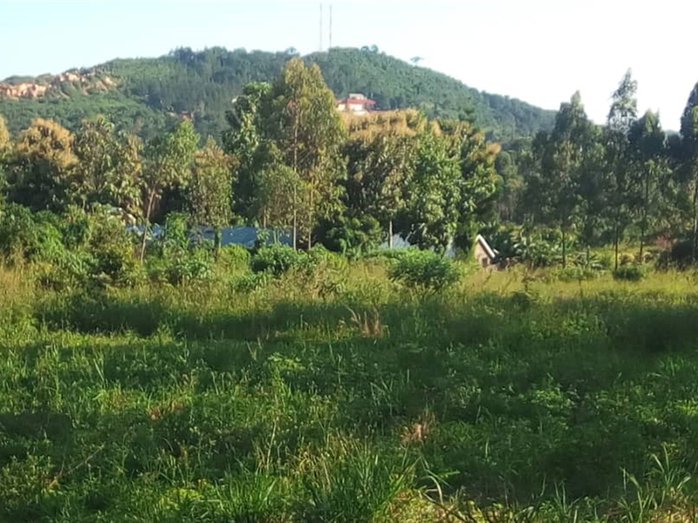 Agricultural Land for sale in Mbalala Mukono