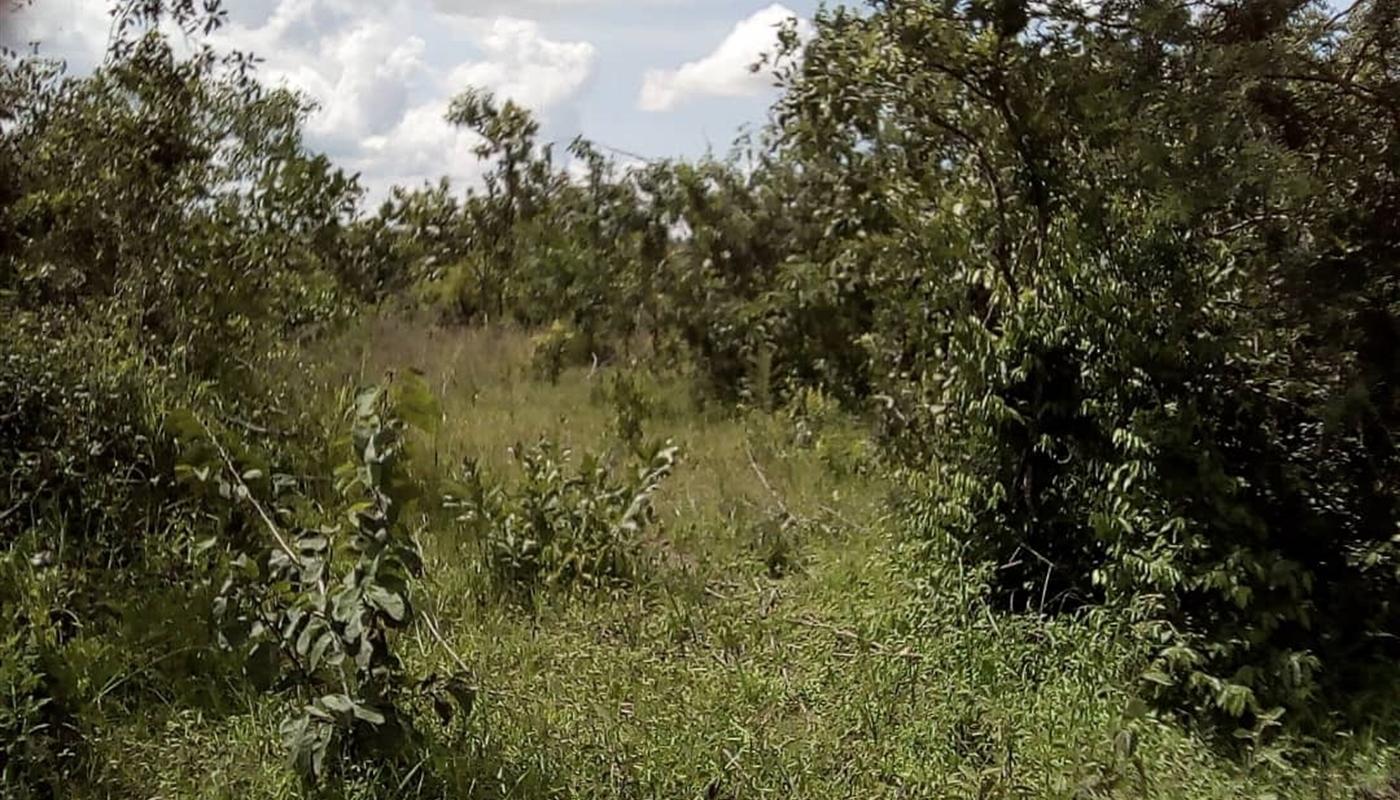 Nakasongola