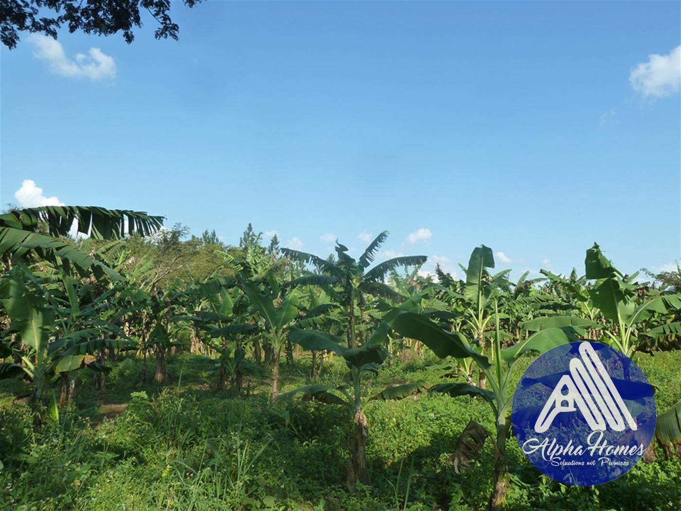 Residential Land for sale in Zirobwe Wakiso