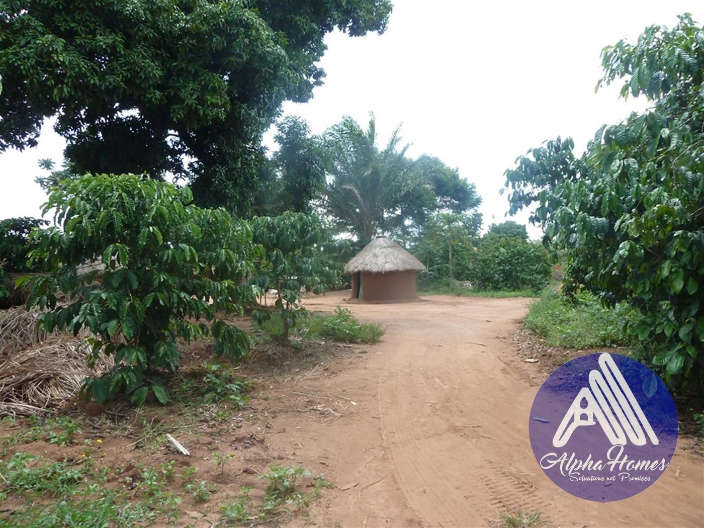 Residential Land for sale in Zirobwe Wakiso