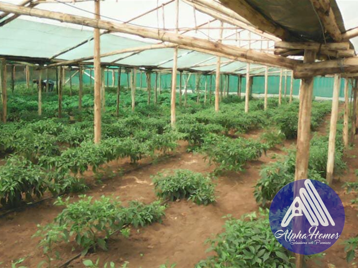 Agricultural Land for sale in Zirobwe Mityana
