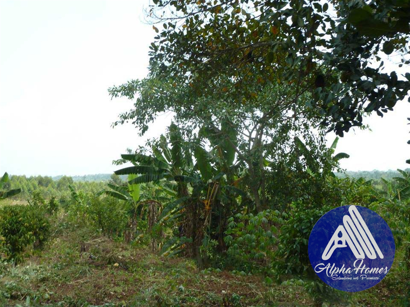 Residential Land for sale in Zirobwe Kampala