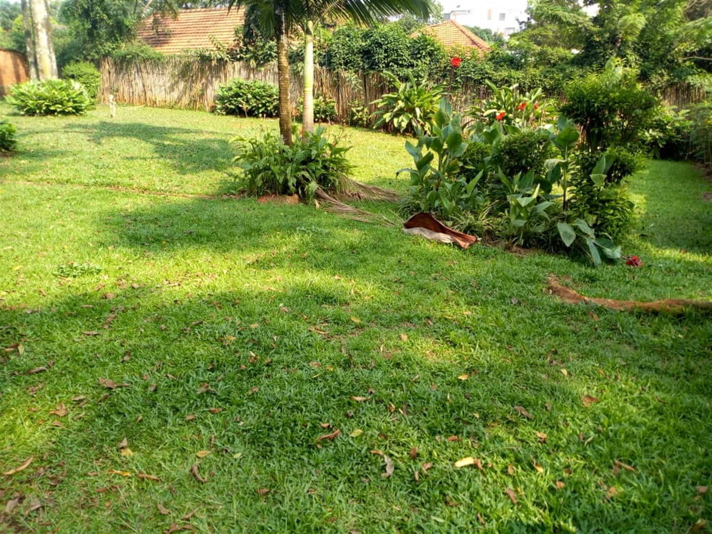Mansion for rent in Kololo Kampala
