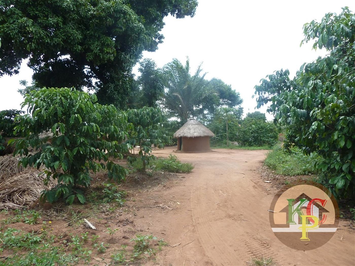 Residential Land for sale in Zirobwe Luwero