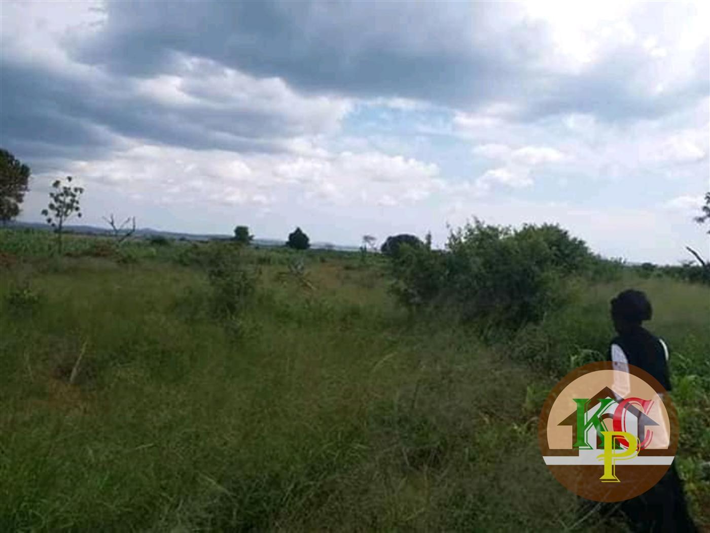 Agricultural Land for sale in Galilaya Kayunga
