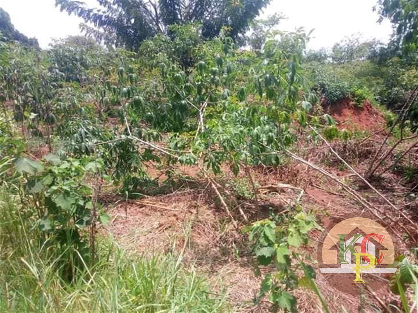 Agricultural Land for sale in Kakooge Luwero