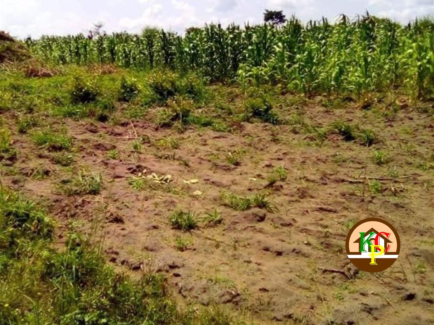 Agricultural Land for sale in Bwabulamira Kayunga