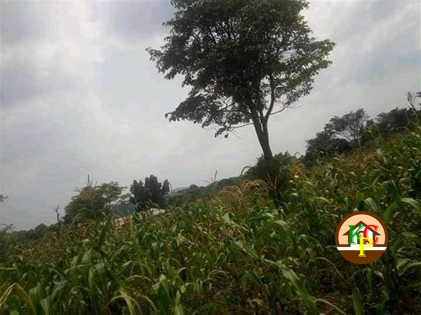 Residential Land for sale in Wobulenzi Luwero