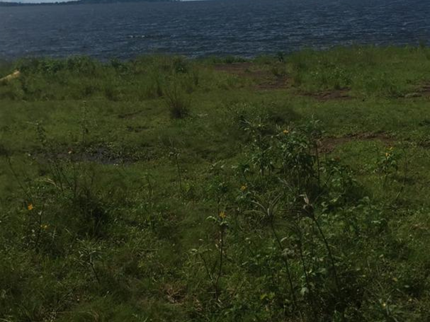 Agricultural Land for sale in Kalangala Kalangala