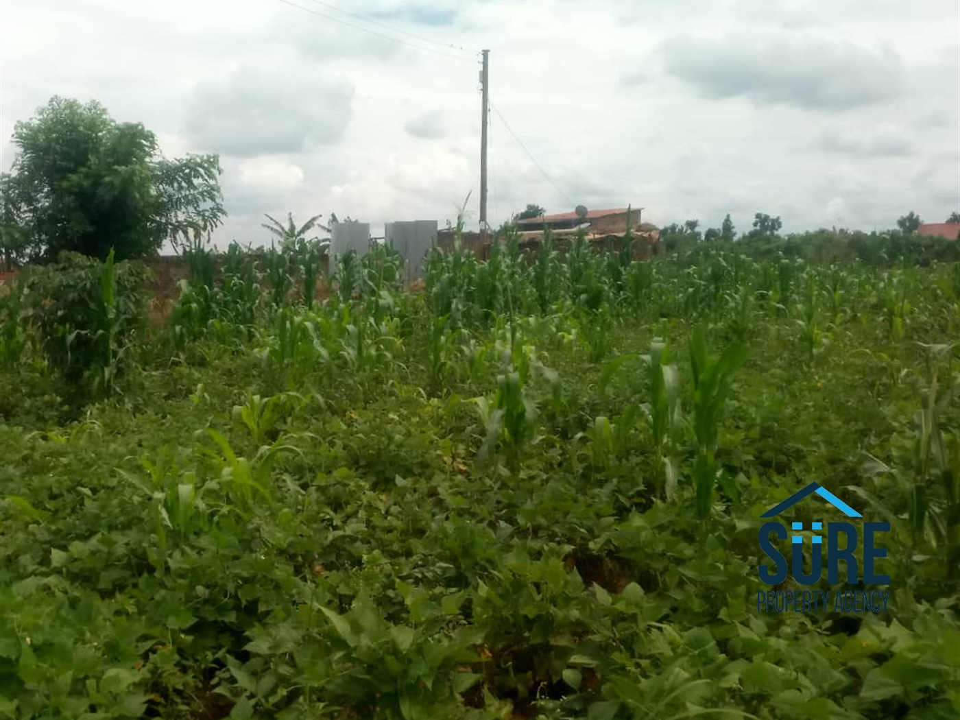 Residential Land for sale in Nakasaja Mukono