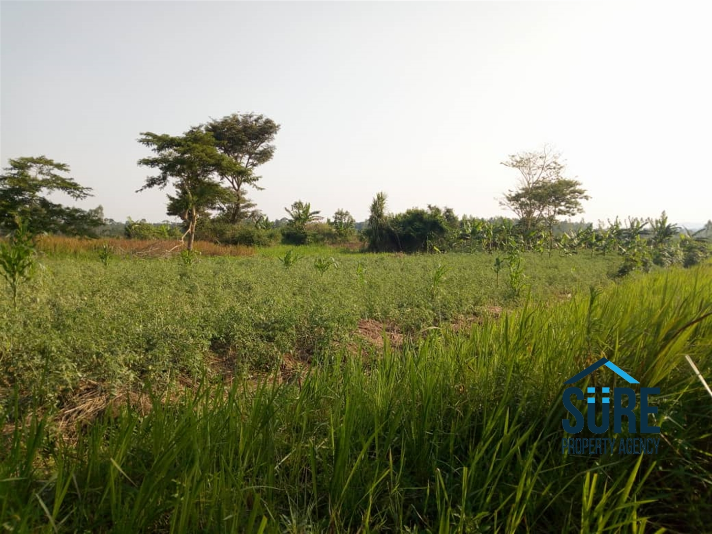 Residential Land for sale in Busika Luwero