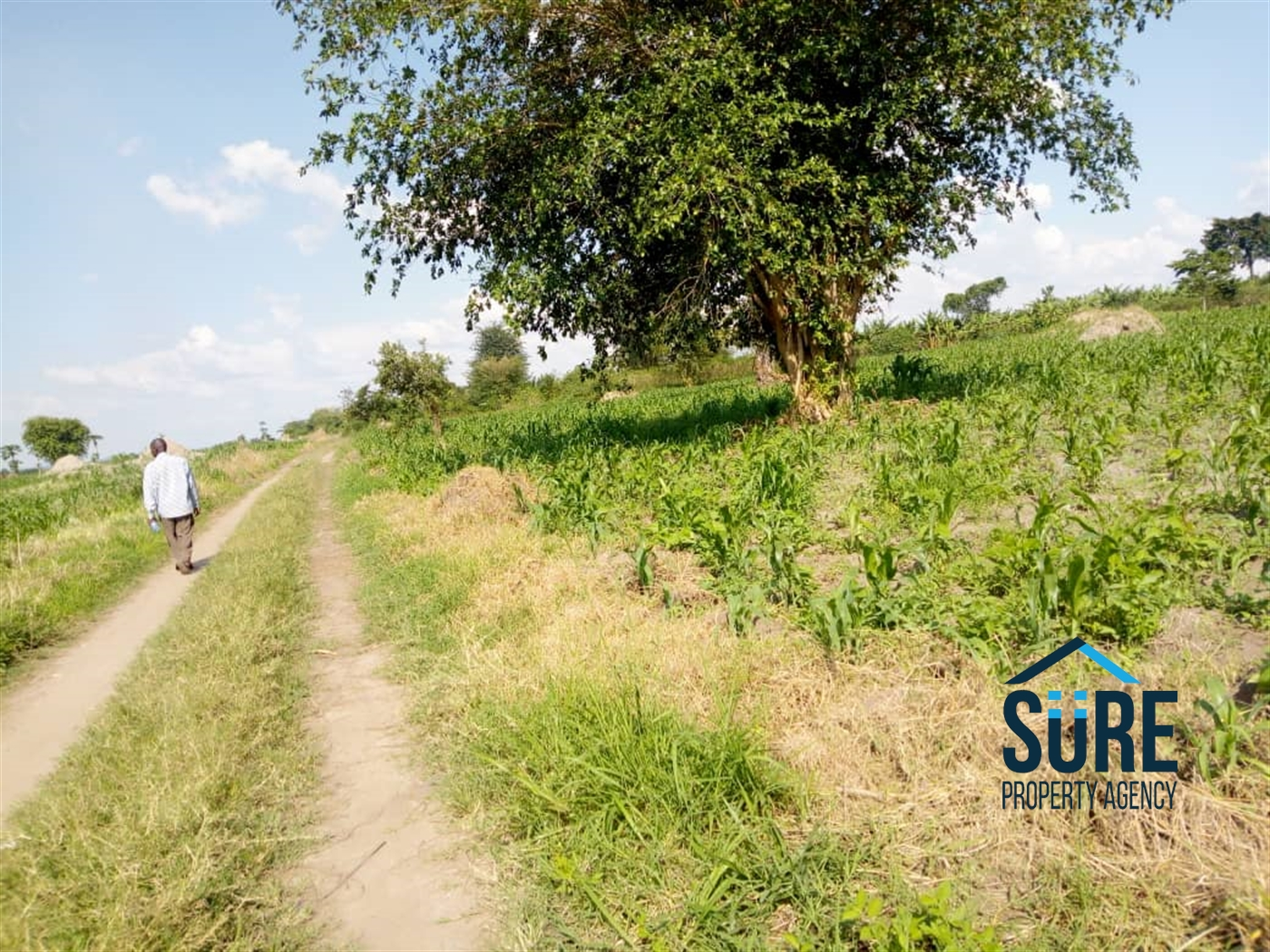 Multi Purpose Land for sale in Gayaza Kalungu