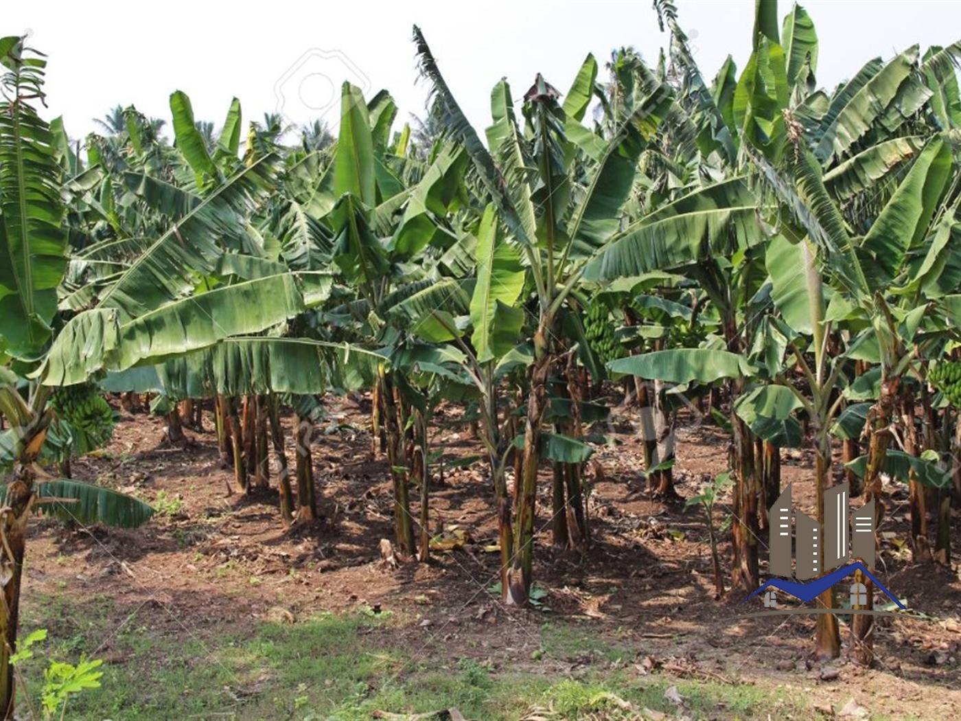 Multi Purpose Land for sale in Kitabule Mukono