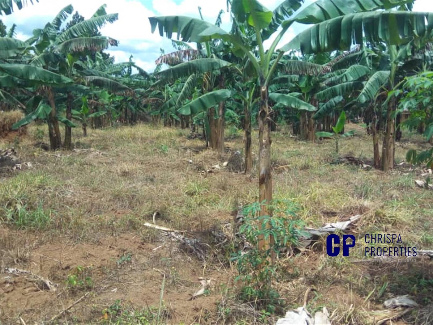 Multipurpose Land for sale in Matugga Wakiso