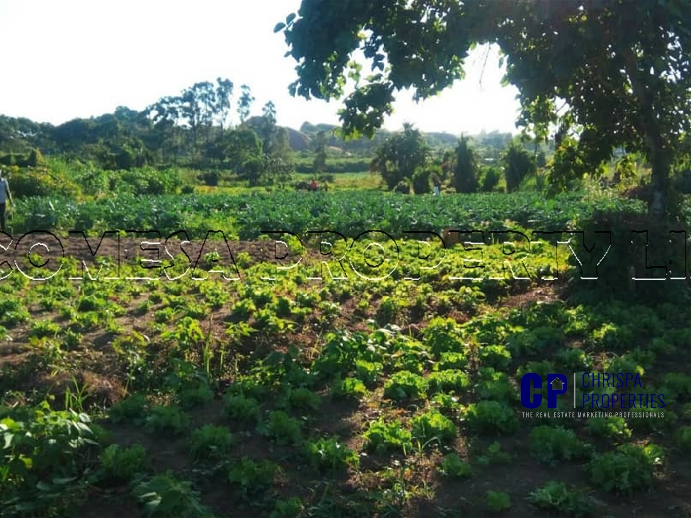 Multi Purpose Land for sale in Lutembe Wakiso