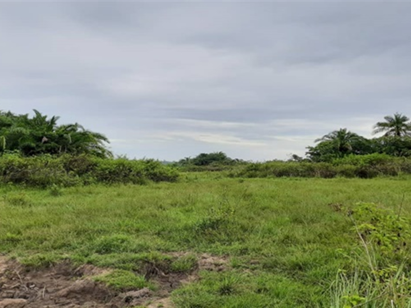 Agricultural Land for sale in Namungodi Busia