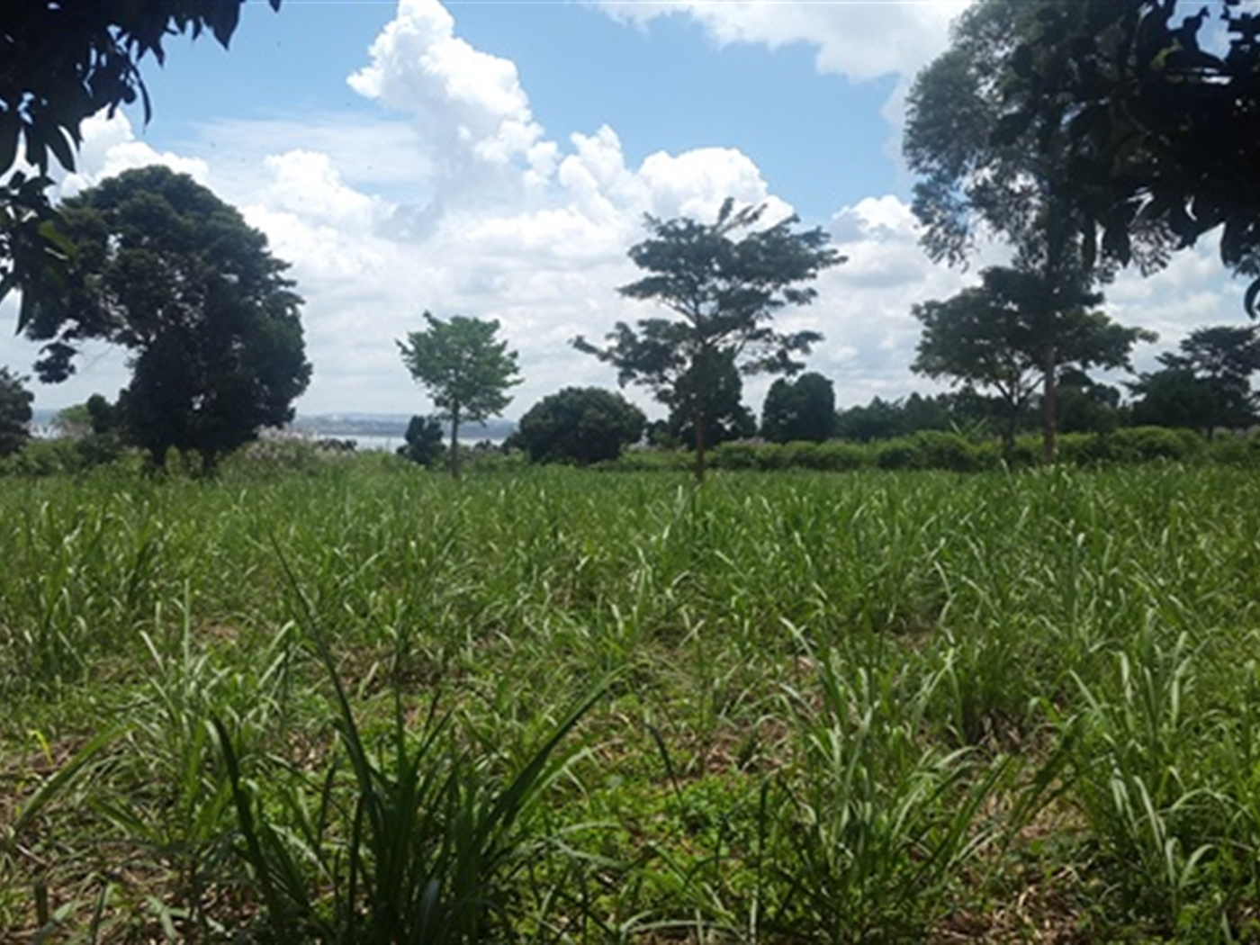 Agricultural Land for sale in Ntinkalo Jinja
