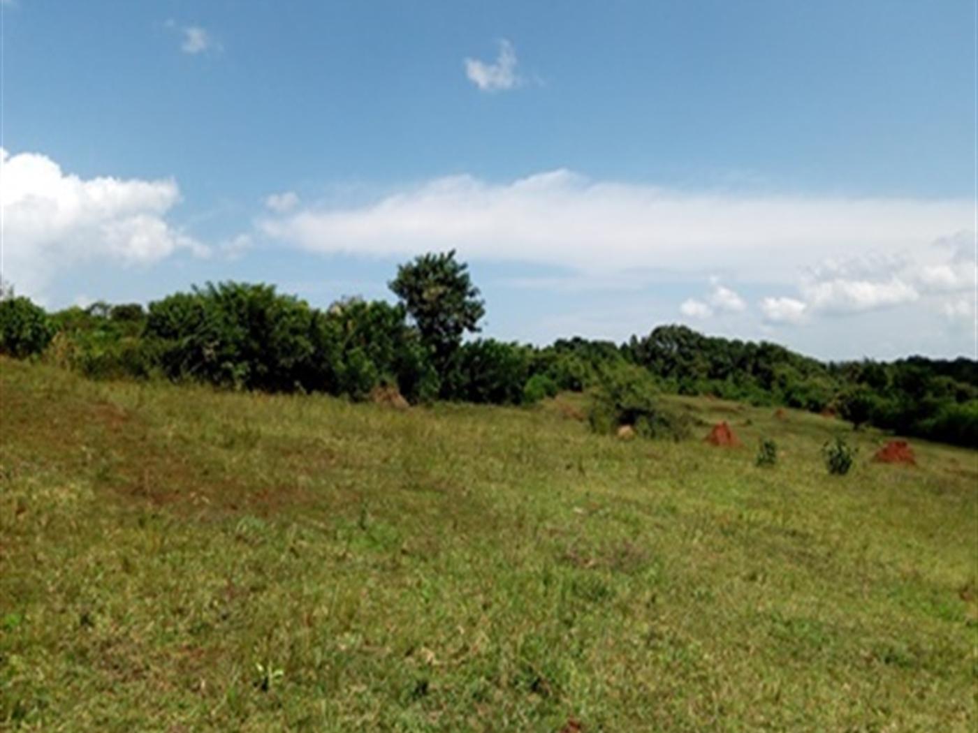 Industrial Land for sale in Njeru Jinja
