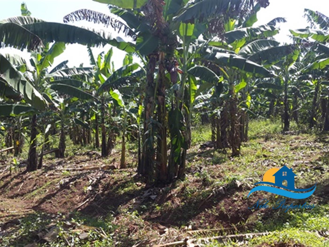 Agricultural Land for sale in Njeru Jinja