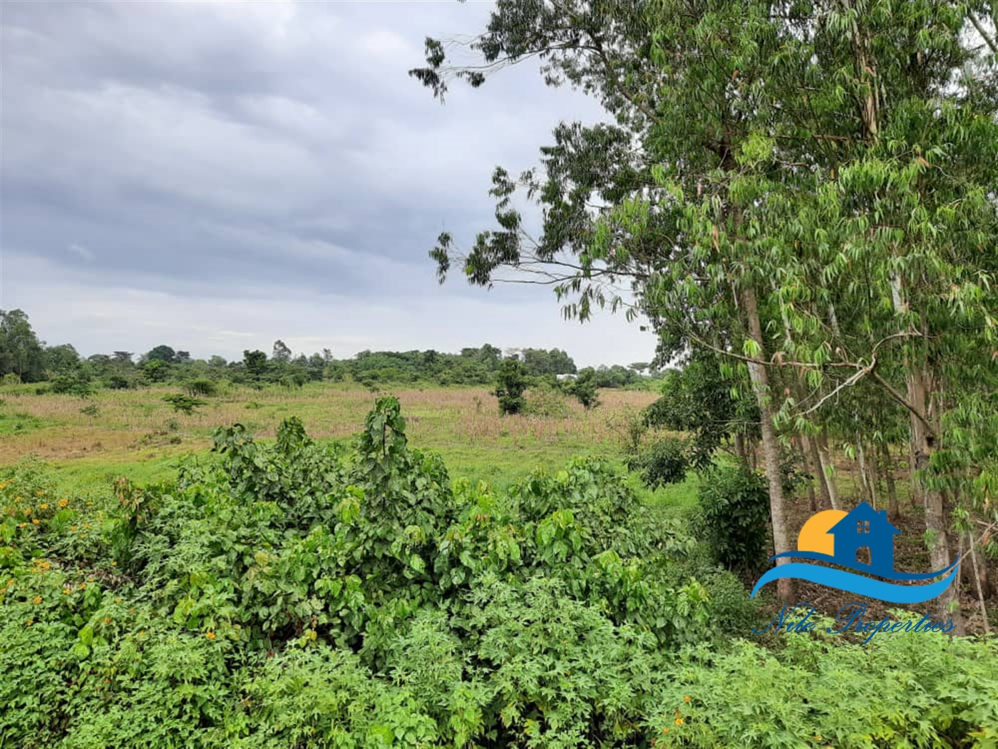 Commercial Land for sale in Namungodi Busia