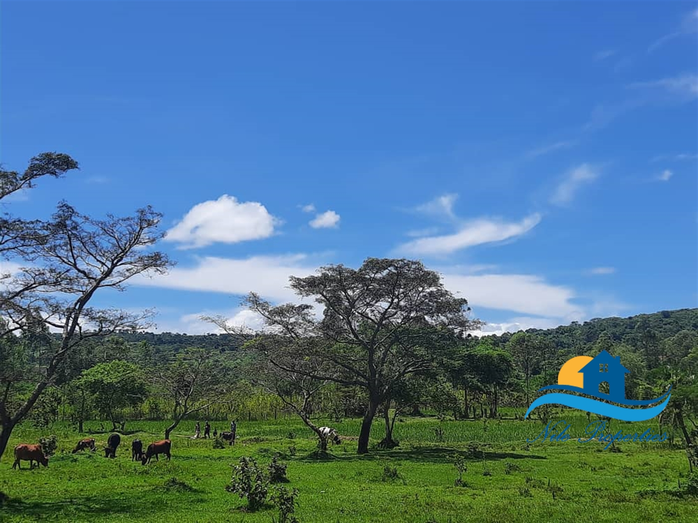Agricultural Land for sale in Nyenga Buyikwe