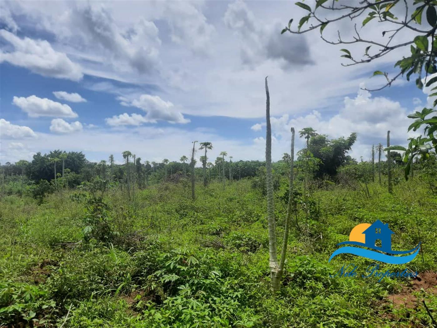 Multipurpose Land for sale in Kangulumira Kayunga