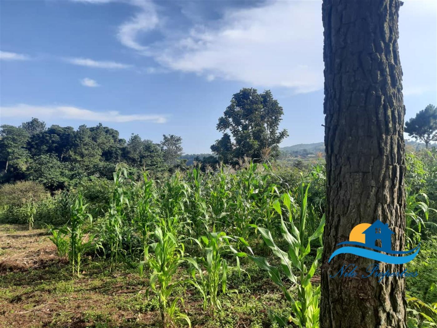 Multipurpose Land for sale in Buwenda Jinja