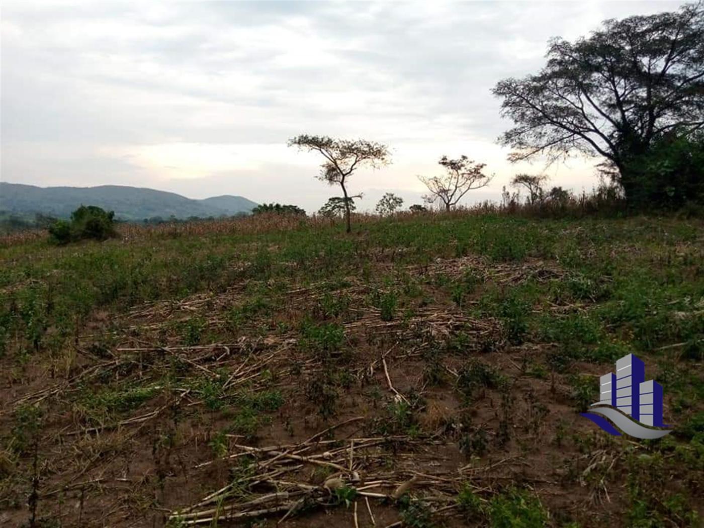 Multi Purpose Land for sale in Rwamwanja Kamwenge