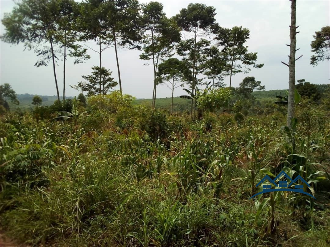 Agricultural Land for sale in BUDUGAALA Mukono