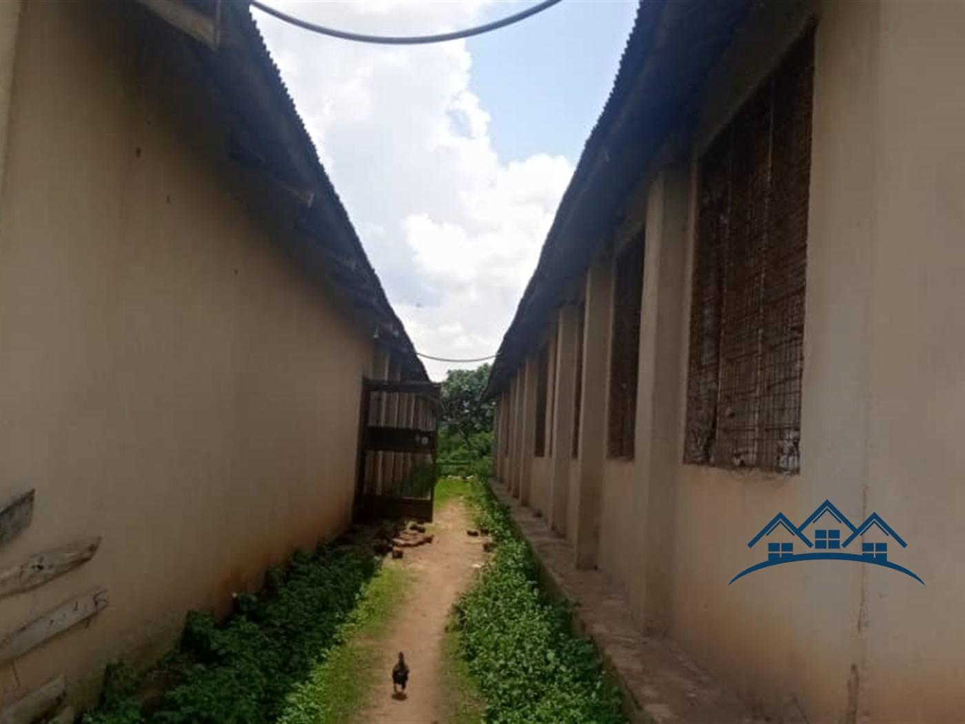 Farm for rent in Kira Wakiso