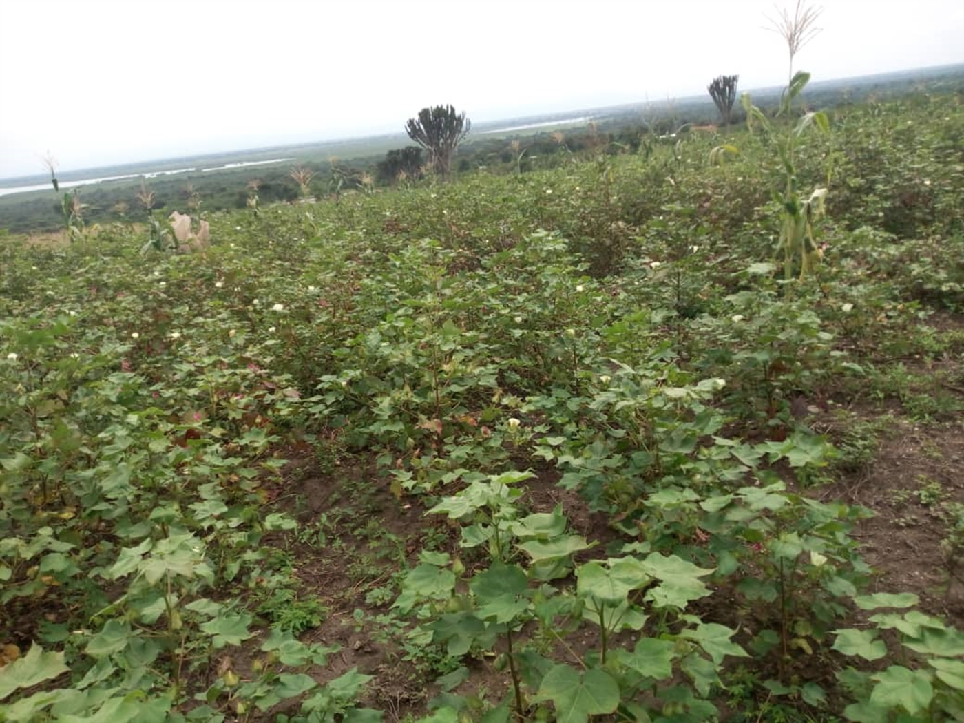 Recreational Land for sale in Municipality Kasese