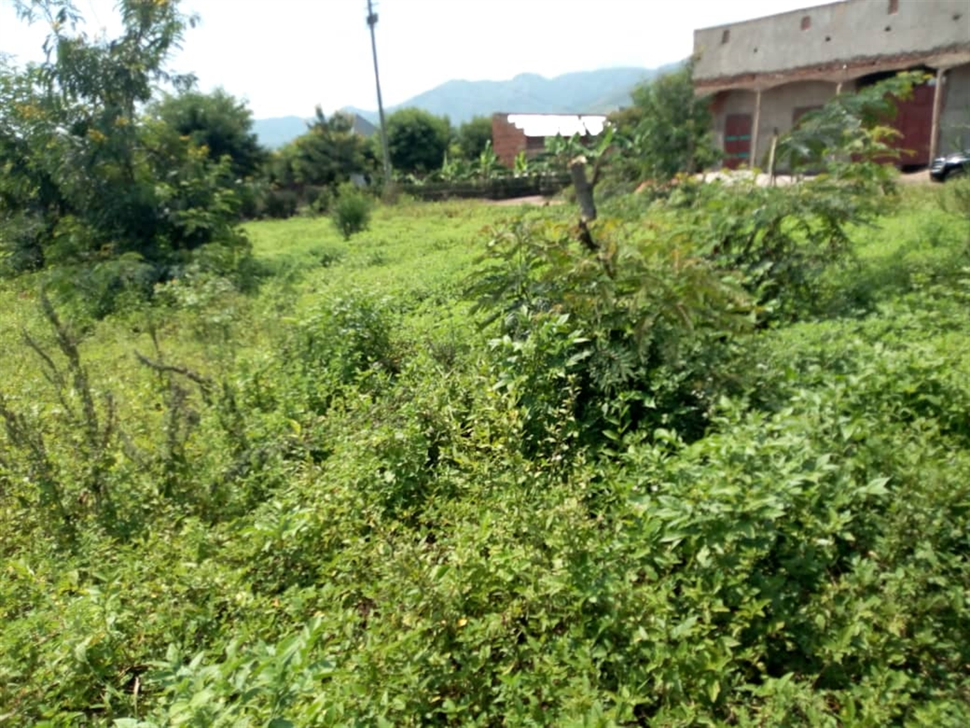 Multi Purpose Land for sale in Kidodo Kasese