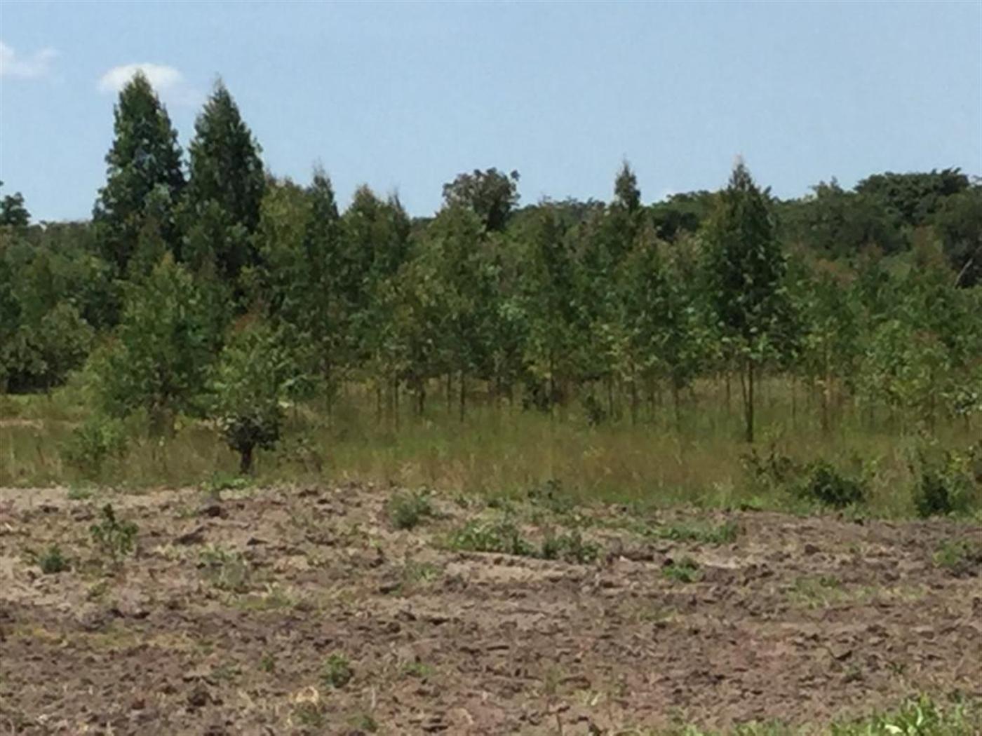 Farm for sale in Kamila Luwero