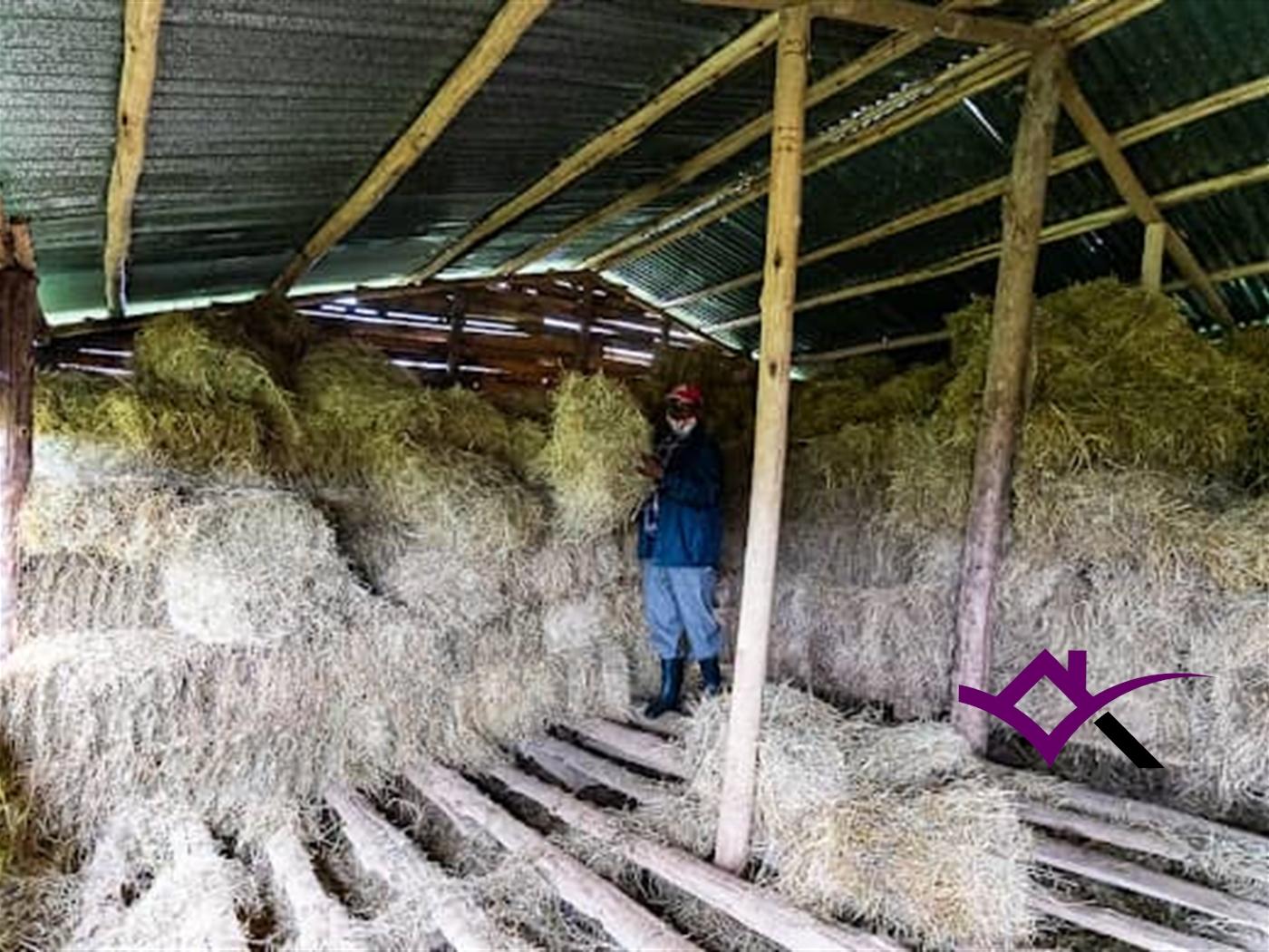 Farm for sale in Kasanda Mityana