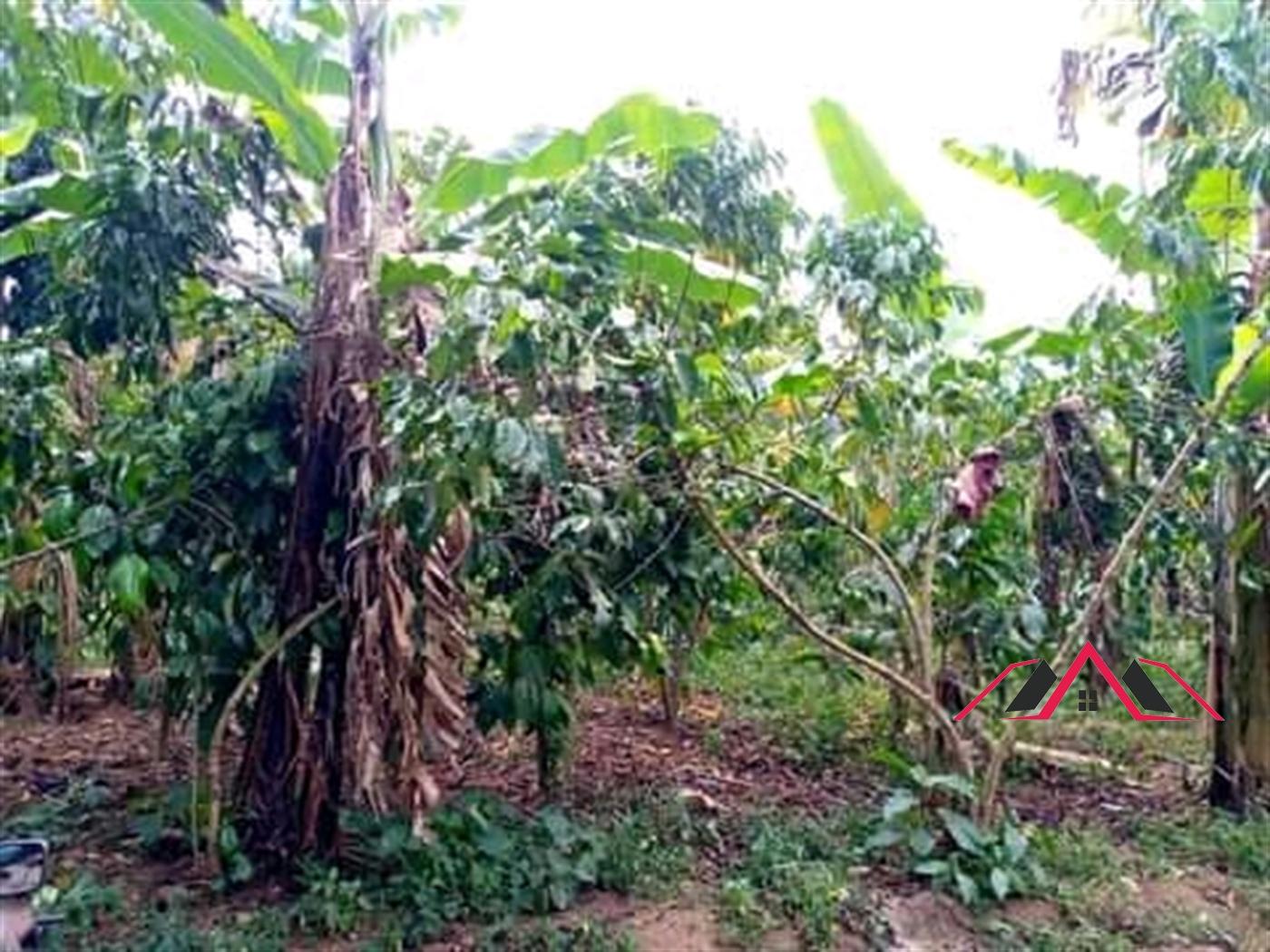 Residential Land for sale in Mukiyunga Mukono